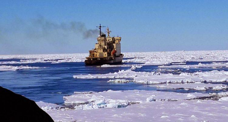 licitación de la campaña antártica