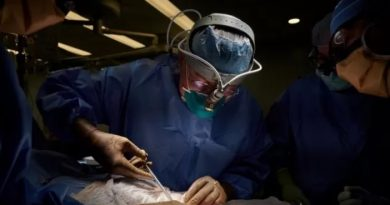 Trasplantaron con éxito el riñón de un cerdo a un paciente humano, pero aún hay interrogantes